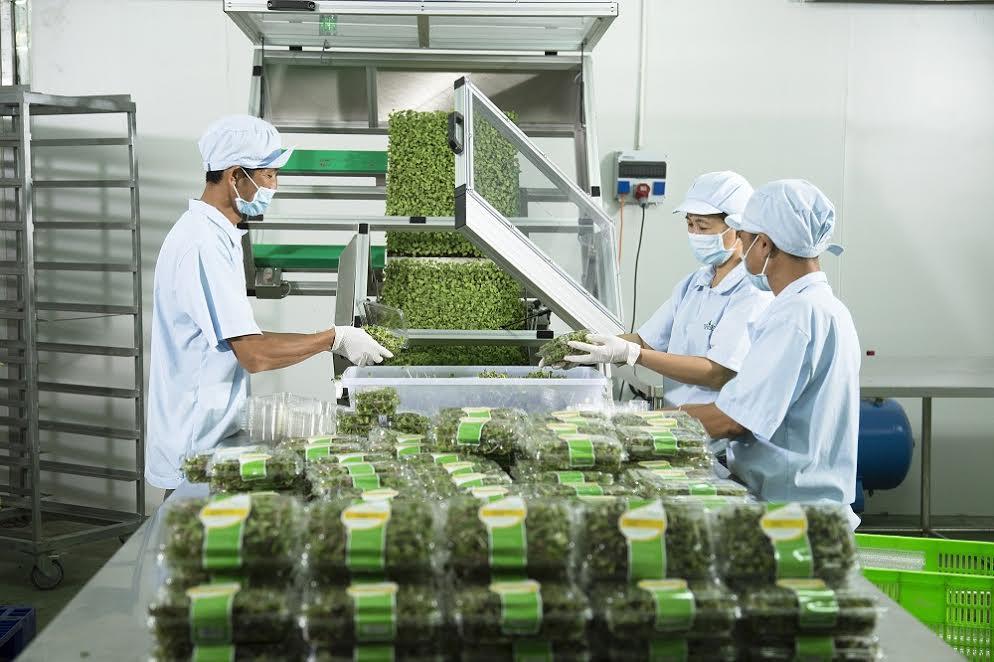 VinEco sẽ kiểm soát chất lượng trong quá trình sản xuất và trước thu hoạch, đồng thời thu mua sản phẩm và hôc trợ phát triển thương hiệu cho các hộ sản xuất.