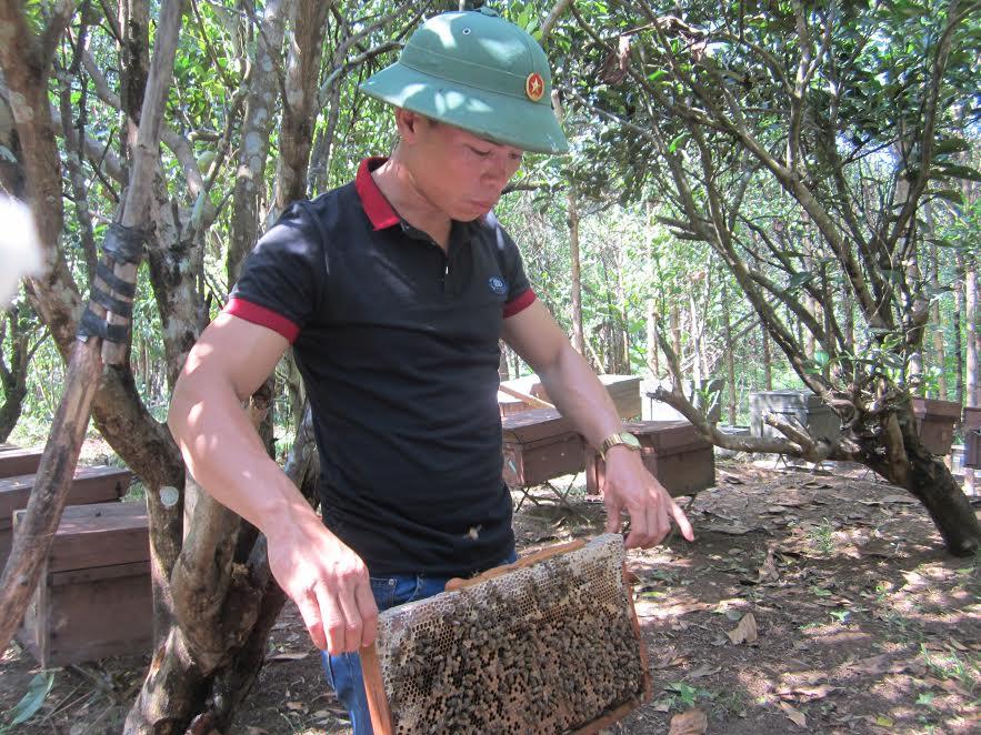 Mô hình nuôi ong lấy mật của anh Nguyễn Văn Kỳ (Hiệp Đức). Ảnh: L.T.N