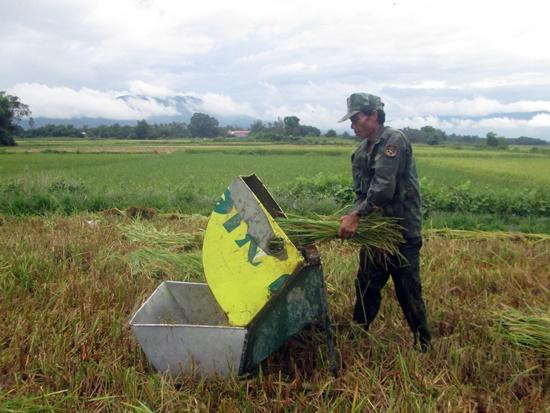 Người dân huyện Đại Lộc tranh thủ gặt lúa trước khi mưa bão tràn về