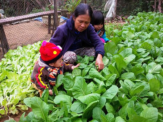 Tận dụng những mảnh đất trống để trồng rau đang là lựa chọn của nhiều bà nội trợ. Ảnh: L.N