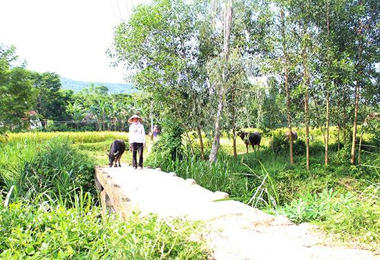 Cây cầu tại đội 5 (thôn Quý Lộc, Tam Lộc) không có lan can, đặc biệt nguy hiểm mùa lũ, đang được mời thầu xây mới. Ảnh: VĂN HÀO