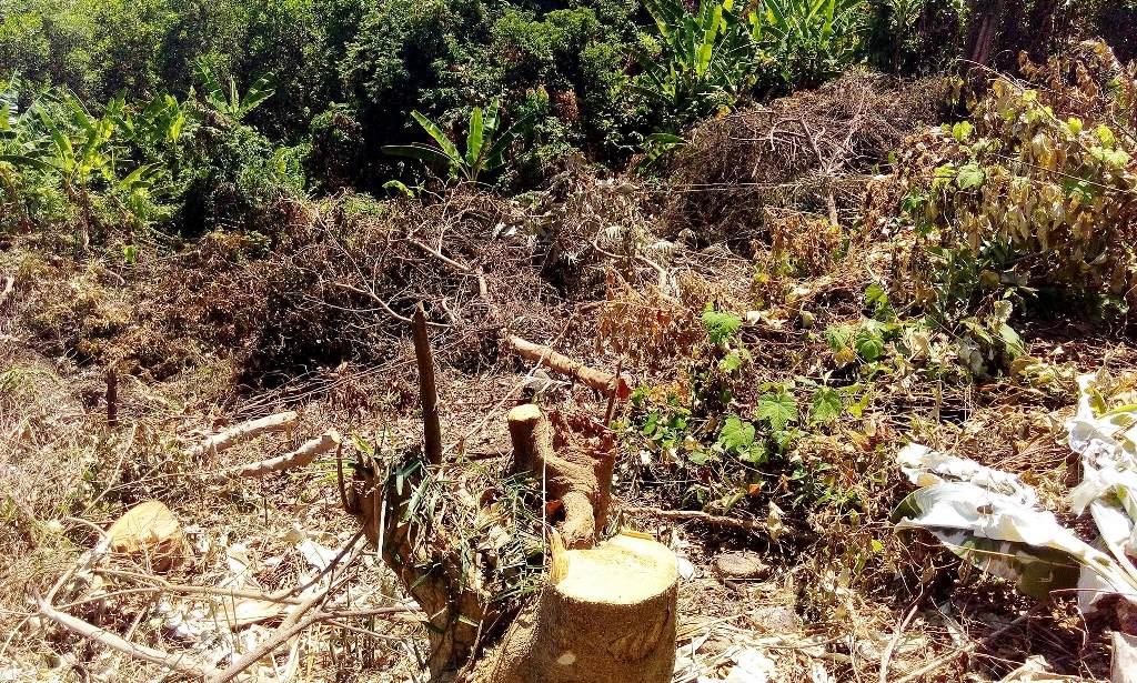Một góc rừng giáp ranh Bình Trị bại tàn phá. Ảnh: XUÂN THỌ