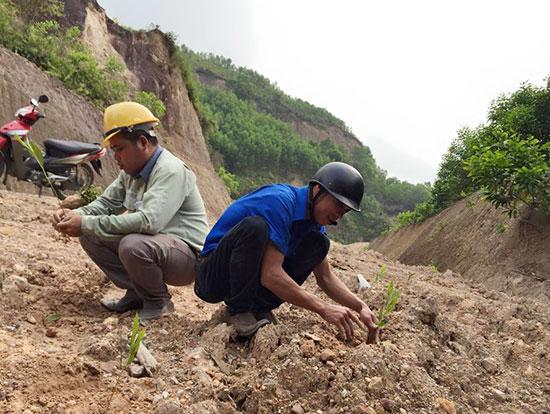 Đoàn viên Công ty CP Than điện Nông Sơn nhận trồng keo gây quỹ. Ảnh: T.L