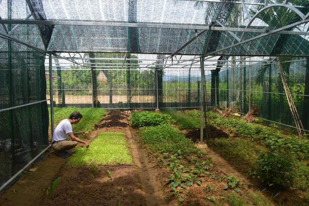 Cần nhiều hơn những mô hình canh tác nông nghiệp theo hướng bền vững.  Trong ảnh: Mô hình trồng rau sạch trong nhà lưới tại huyện Đại Lộc.