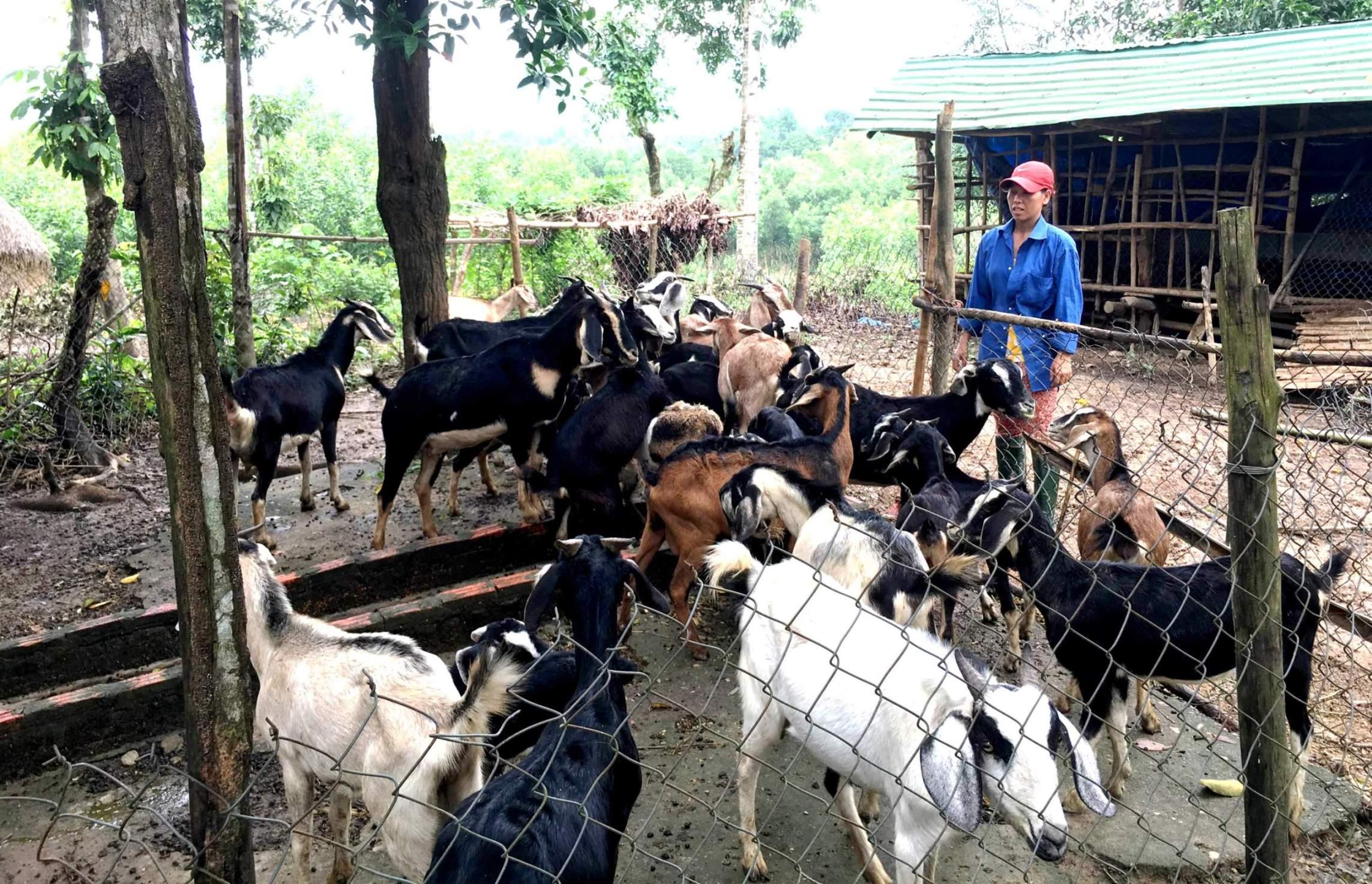 Xây dựng mô hình trang trại là hướng đi mới để cải thiện kinh tế. Ảnh: PHAN VINH