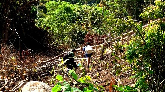 Người dân thường xuyên chặt phá rừng và lấn chiếm đất lâm nghiệp trái phép tại Nông Sơn.