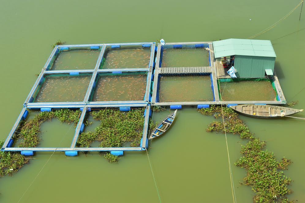 Ngành nuôi trồng thủy sản vốn là thế mạnh của vùng đang đứng trước nhiều vấn đề nhức nhối.