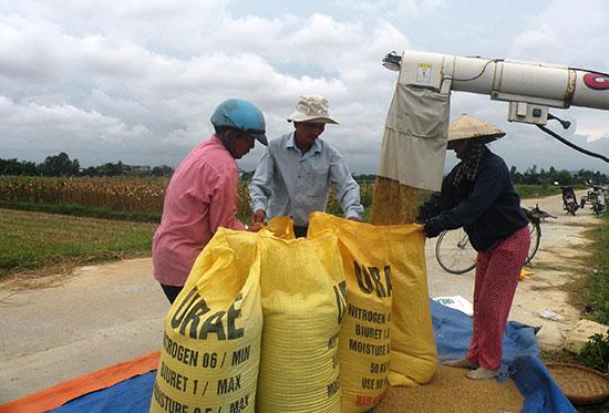 Năm 2016, tổng sản lượng lúa toàn tỉnh giảm 14.057 tấn so với năm ngoái.