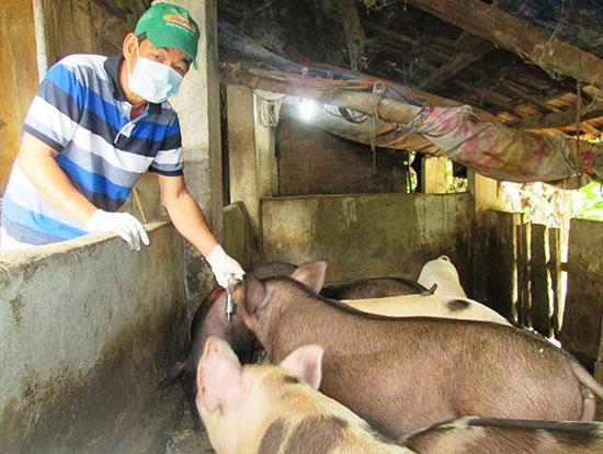 Cần đặc biệt quan tâm đến việc tiêm phòng vắc xin cho đàn vật nuôi.Ảnh: VĂN SỰ