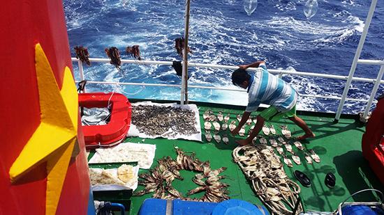 Sản phẩm của các tay câu, sau những đêm rong ruổi trên vùng biển Hoàng Sa. Theo ngư dân Nguyễn Duy Thuận, việc đi câu ngoài giờ làm lưới là thú chơi tao nhã ở Hoàng Sa.