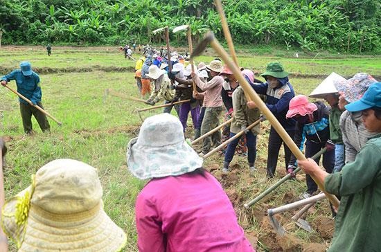 Gần 100 người thuộc 60 gia đình cũng cuốc đất trên đám ruộng chung. Ảnh: L.V.C