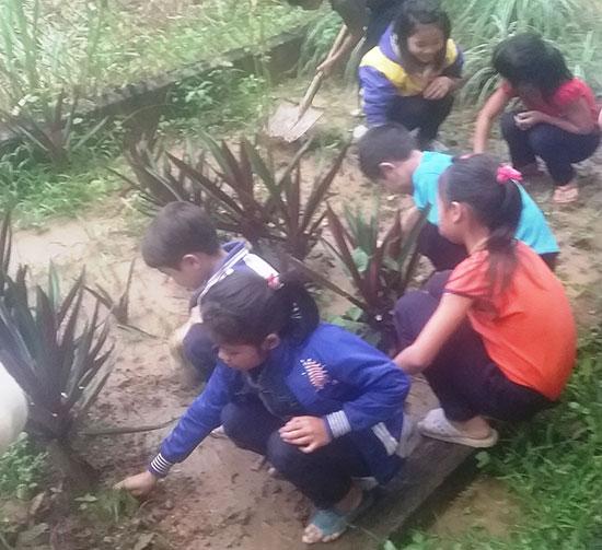 Các em học sinh Trường TH Trà Dơn chăm sóc vườn thuốc nam. Ảnh: L.T.N