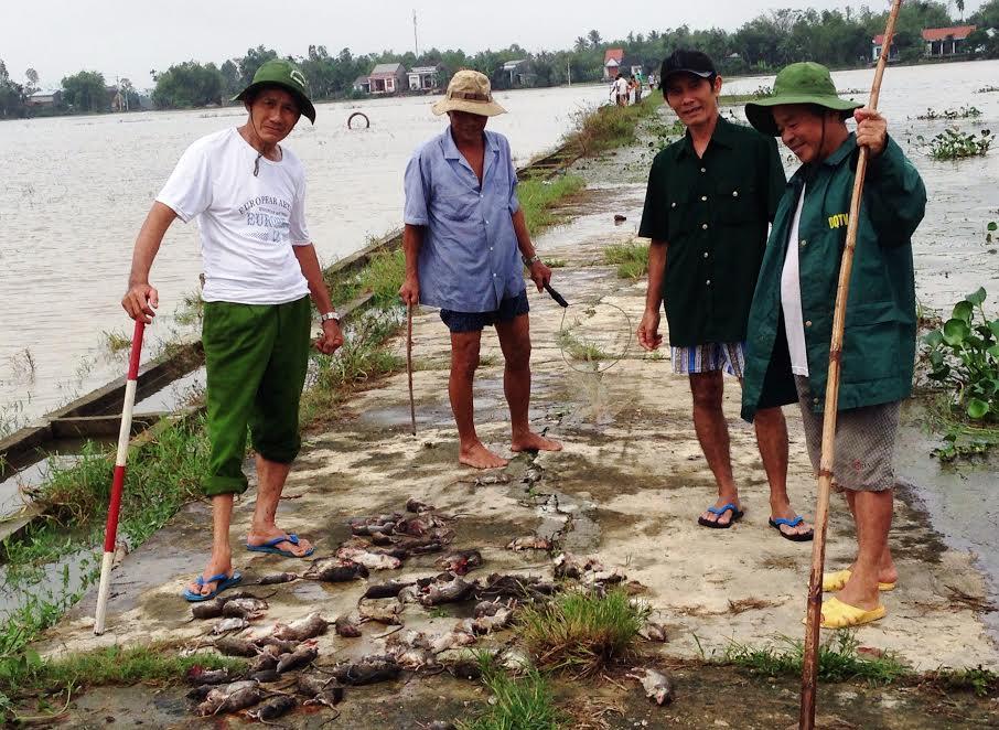 Trong 3 ngày qua, chính quyền và nhân dân thôn Trung Vĩnh (xã Quế Xuân 1, huyện Quế Sơn) đã tiêu diệt hơn 800 con chuột. Ảnh: MAI NHI