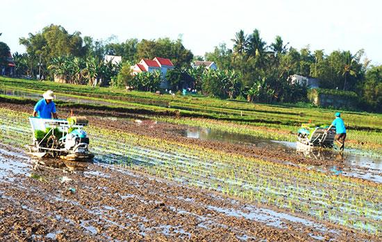 Tích tụ, tập trung ruộng đất sẽ áp dụng cơ giới hóa, tạo sản phẩm hàng hóa lớn. Ảnh: N.Q.V