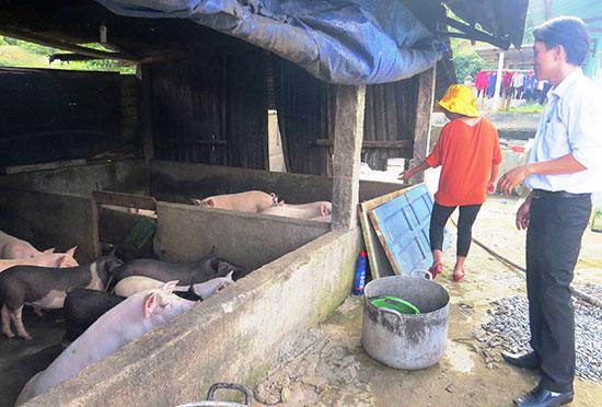 Đàn heo, sản phẩm từ mô hình tăng gia sản xuất của Trường Lý Tự Trọng là nguồn cải thiện bữa ăn và đời sống của trẻ.