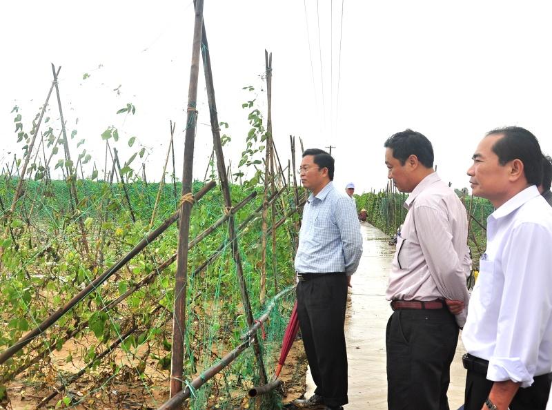 Phó Chủ tịch UBND tỉnh Lê Trí Thanh kiểm tra thiệt hại mưa lũ tại cánh đồng Bàu Tròn (xã Đại An, huyện Đại Lộc). Ảnh: VINH ANH