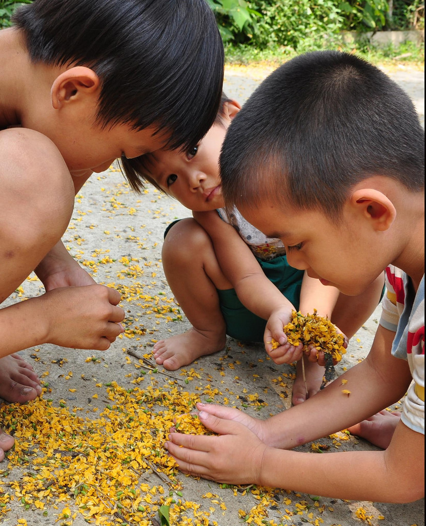 Vườn Cừa - nẻo về tuổi thơ. Anh: DTT
