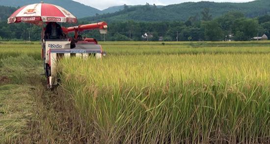 Nhờ thực hiện các cơ chế hỗ trợ, người dân Phú Ninh đã áp dụng cơ giới hóa vào sản xuất nông nghiệp. Ảnh: T.A