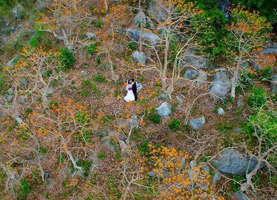 Rừng ngô đồng đỏ trong bức ảnh đoạt giải nhất cuộc thi ảnh cưới đẹp ở Hội An.  Ảnh: Ban tổ chức cuộc thi ảnh cưới đẹp Hội An cung cấp