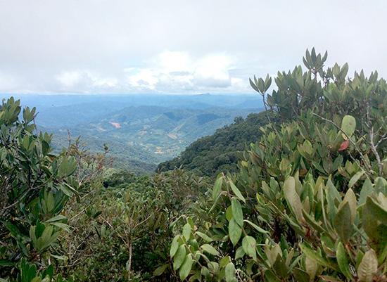 Từ thung lũng đỗ quyên trên đỉnh Arung nhìn về phía tây nam.  Ảnh: Ông Bh'riu Liếc cung cấp