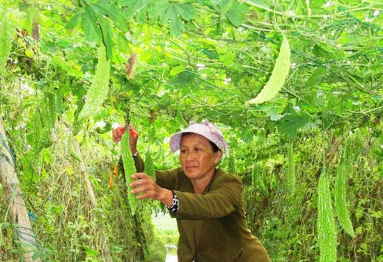Thời gian qua, Duy Xuyên đã hình thành được rất nhiều vùng sản xuất cây trồng cạn theo hướng hàng hóa, đạt hiệu quả kinh tế cao. Ảnh: VĂN SỰ