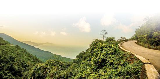 Hoa rừng khoe sắc ở Hải Vân. Ảnh tư liệu