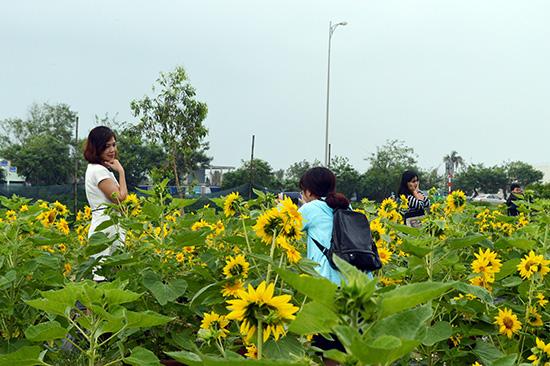 Dạo chơi tại các vườn hoa ngày tết sẽ mang đến nhiều cảm xúc thú vị cho du khách.Ảnh: K.LINH