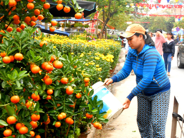 Kumquat and other kinds of flowers in Hoi An