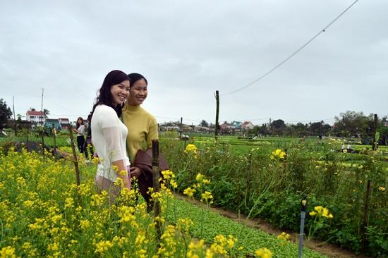 Làm duyên bên luống cải hoa vàng