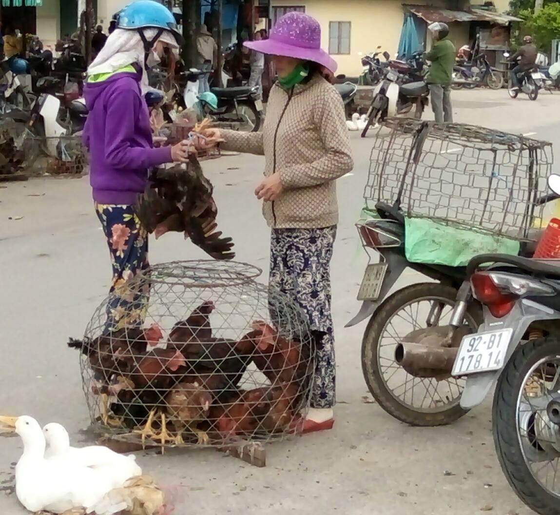 Mua - bán gà ở chợ Hòa Hương (Tam Kỳ) sáng nay, mùng 9 tháng Giêng âm lịch.