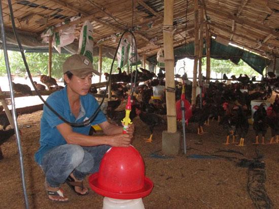  Các mô hình trang trại, gia trại chăn nuôi ở Bình Sa đang phát huy hiệu quả tích cực. Ảnh: T.S