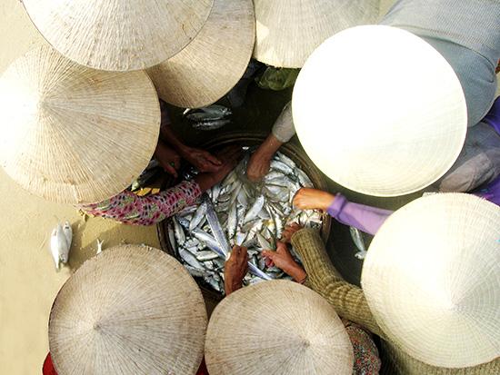 Cá trích được bán ngay tại bờ biển Rạn (Núi Thành).