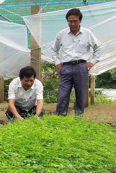 Việc bảo tồn và phát triển các cây dược liệu sẽ giúp cho nguồn thuốc Đông y chủ động và chất lượng hơn. Trong ảnh: Vườn dược liệu được trồng ở Nam Trà My.  Ảnh: N.D