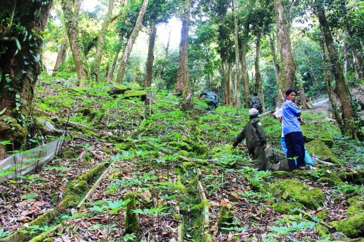 Đã có nhiều vụ trộm sâm xảy ra trên địa bàn huyện Nam Trà My trong những năm qua. Ảnh: T.C