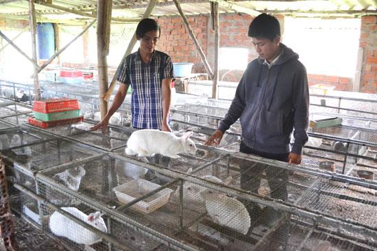 Trang trại của anh Bình mỗi tháng xuất khoảng 100 con thỏ thịt và 50 con thỏ giống. Ảnh: H.C