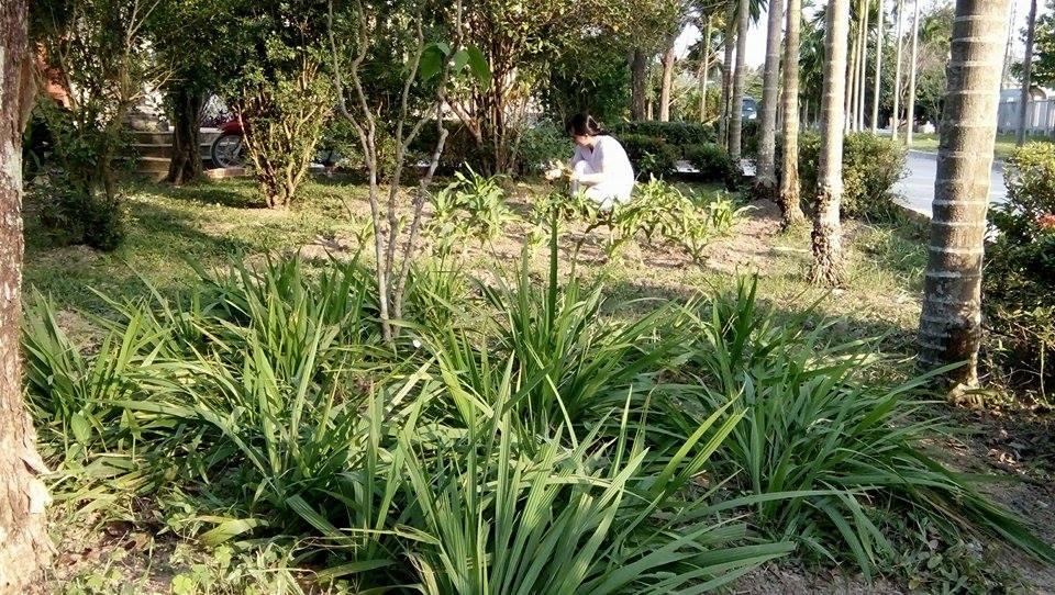 Kế hoạch phát triển ngành dược là khuyến khích trồng dược liệu. Trong ảnh: Vườn thuốc nam ở Bệnh viện Y học cổ truyền tỉnh. ảnh: CHÂU NỮ