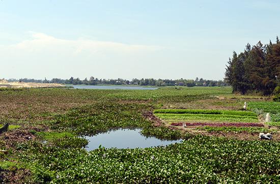 Dòng sông Cổ Cò đoạn qua phường Điện Dương (Điện Bàn) đã bị bồi lấp, thu hẹp dần. Ảnh: TUẤN LỘC