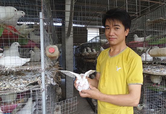 Thầy giáo Phan Ngọc Trung làm kinh tế giỏi với trang trại bồ câu hơn 4.000 con.  Ảnh: NHƯ TRANG