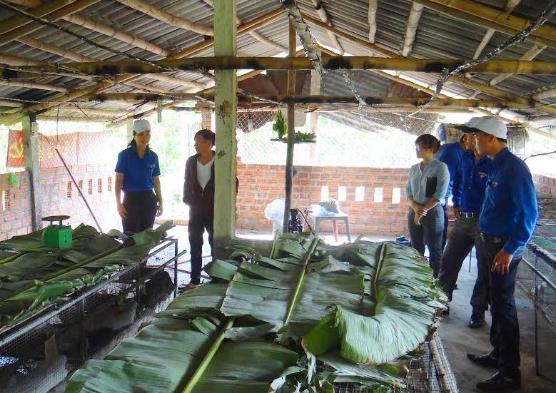 Thăm trại nuôi thỏ của anh Phan Cư