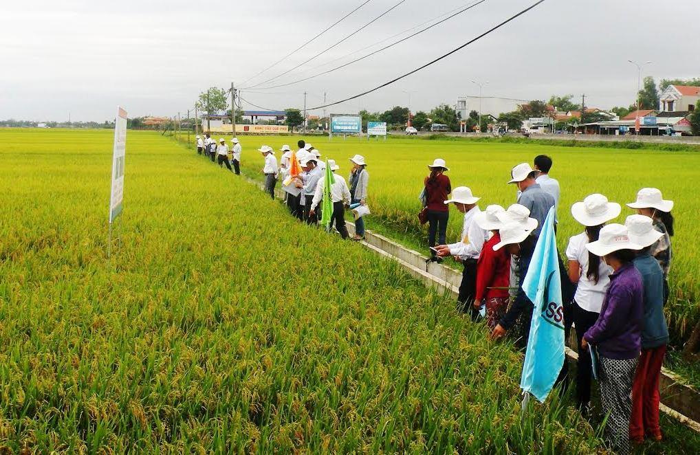 Tham quan các mô hình sản xuất khảo nghiệm tại xã Quế Phú (Quế Sơn) vào sáng nay 14.4.