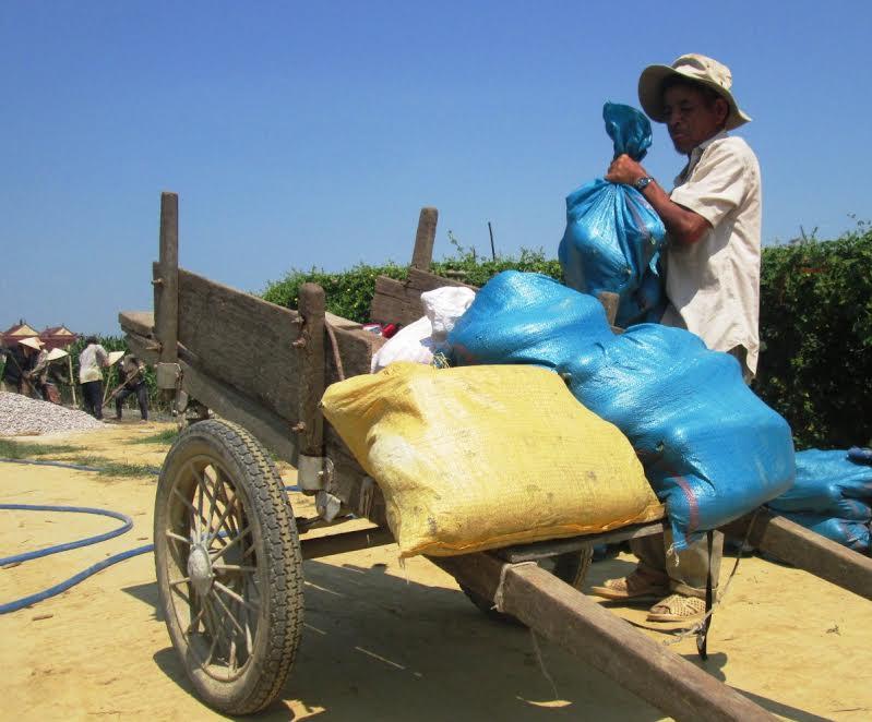 Không thấy thương lái đến ruộng thu mua, nhiều hộ dân hái bí chở ra các chợ bán lẻ. Ảnh: HOÀI NHI