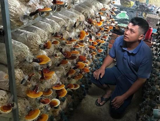 Thái Viết Hiếu với trang trại nấm linh chi của mình. Ảnh: P.A