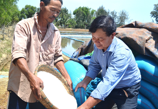 Ông Lê Văn Phú đi khảo sát sản xuất muối tại địa phương. Ảnh: V.Q