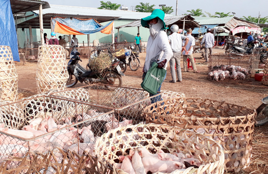 Chợ heo tại thị trấn Hà Lam (huyện Thăng Bình) không sôi động như trước do giá heo sữa giảm. Ảnh: G.Biên