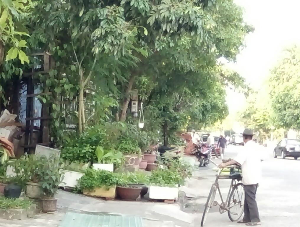 Một hộ ở đường Lê Đình Dương trồng rau trên vỉa hè. ảnh: CHÂU NỮ