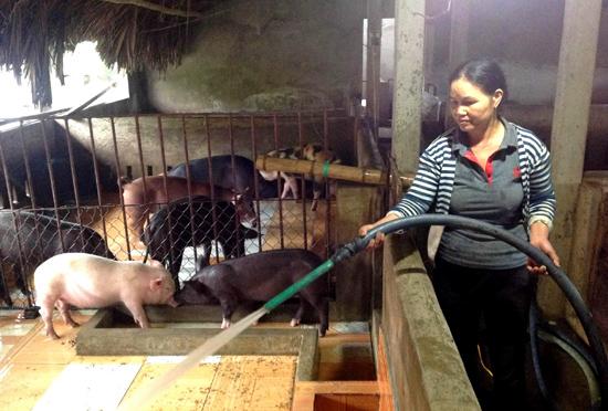 Nhiều gia trại chăn nuôi heo thịt phải cầm chừng vì giá heo đang sụt giảm.Ảnh: PHAN VINH