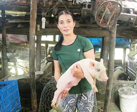 Mô hình hợp tác chăn nuôi heo thịt giữa người dân với doanh nghiệp có nguy cơ rạn nứt trước tình trạng giá bán sản phẩm liên tục giảm mạnh.