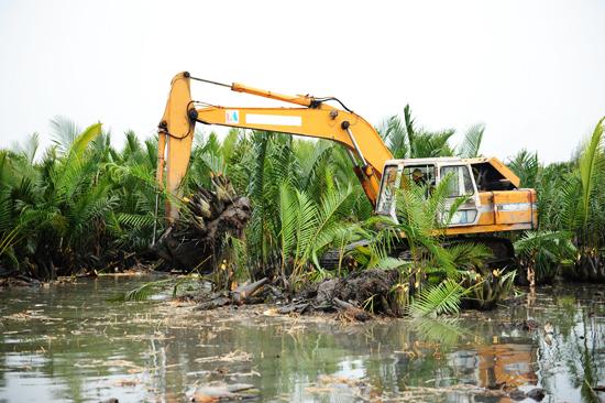 Dừa nước bị triệt phá đồng ngha phá môi trường - cảnh quan thiên nhiên của vùng đệm Khu dự trữ sinh quyển thế giới Cù Lao Chàm.