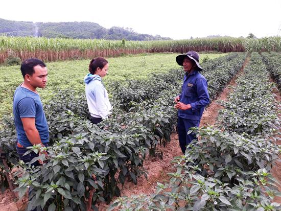 Cán bộ HTX nông nghiệp Đồng Hành hướng dẫn người dân kỹ thuật trồng cây ớt sừng quả to.