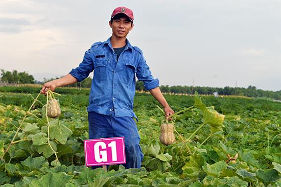 Chàng kỹ sư cơ khí Nguyễn Thành Hải trên cánh đồng rau hữu cơ của mình.Ảnh: VĨNH LỘC